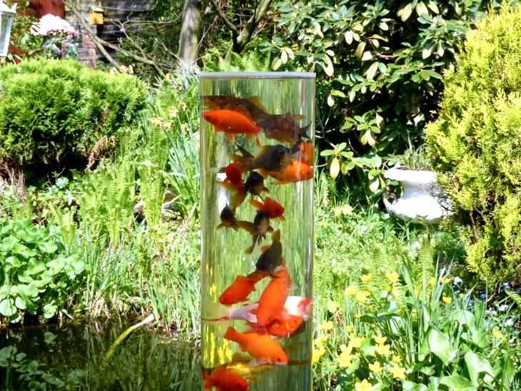 Index of handygood produkt fischturm for Peces para estanque de jardin